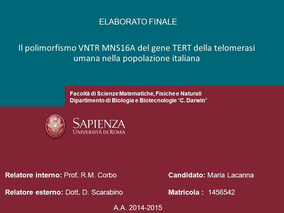 ELABORATO FINALE Il polimorfismo VNTR MNS16A del gene TERT della telomerasi umana nella popolazione italiana.