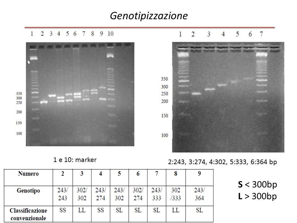 Genotipizzazione S < 300bp L > 300bp 1 e 10: marker