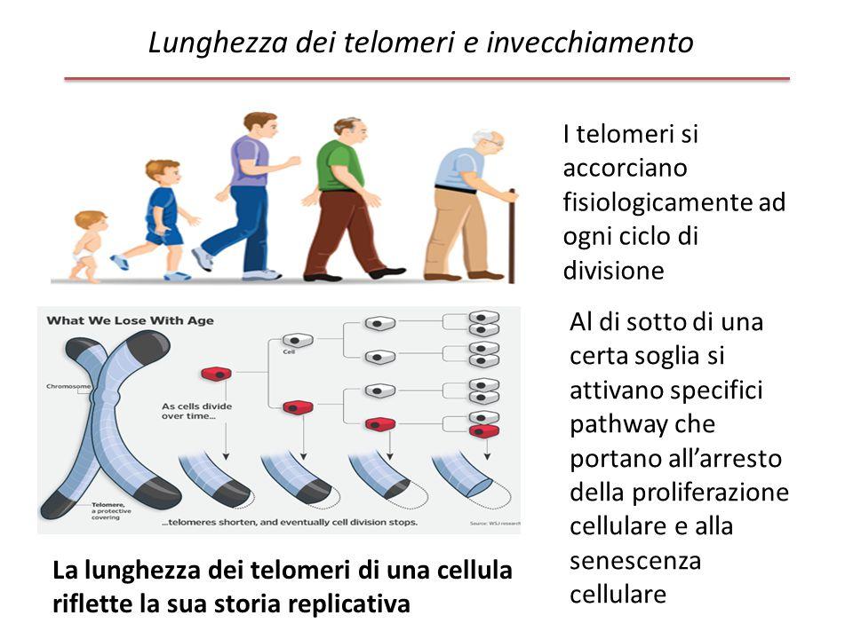 Lunghezza dei telomeri e invecchiamento