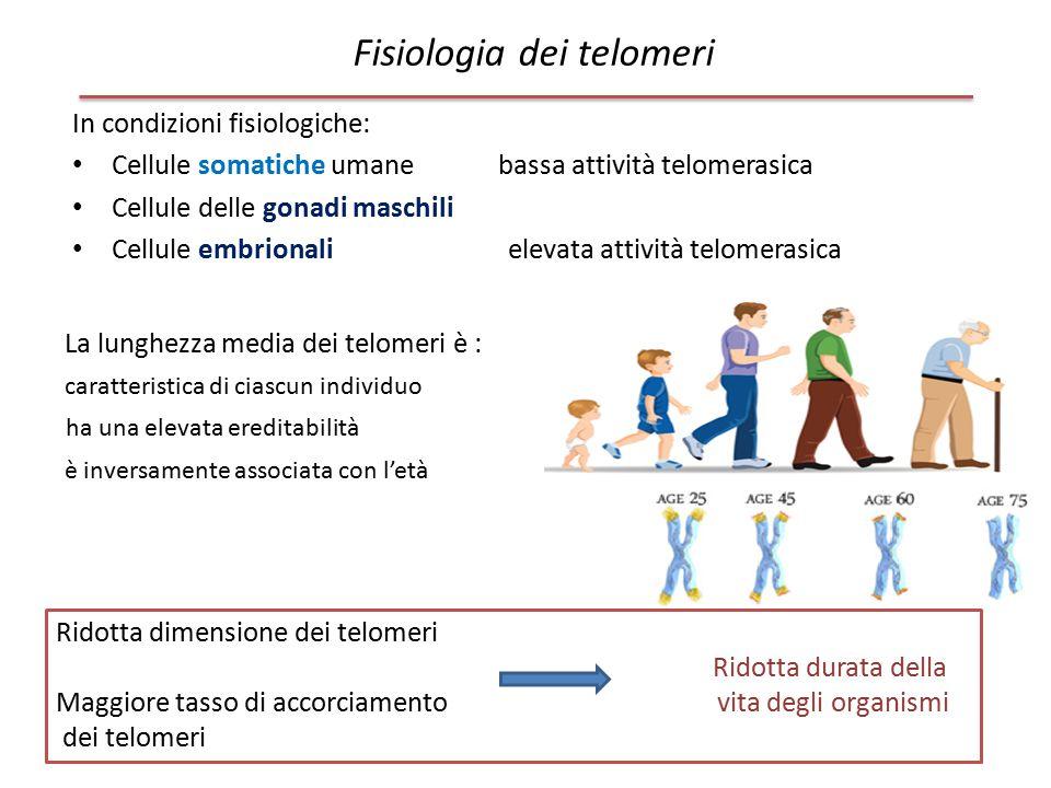 Fisiologia dei telomeri