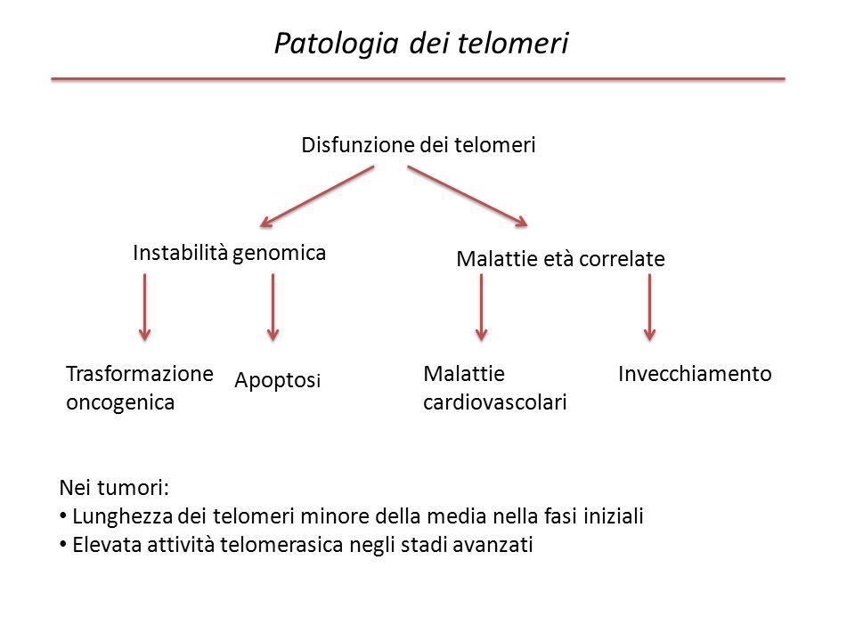 Patologia dei telomeri