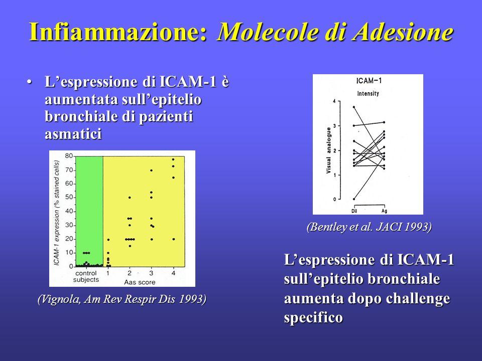 Infiammazione: Molecole di Adesione