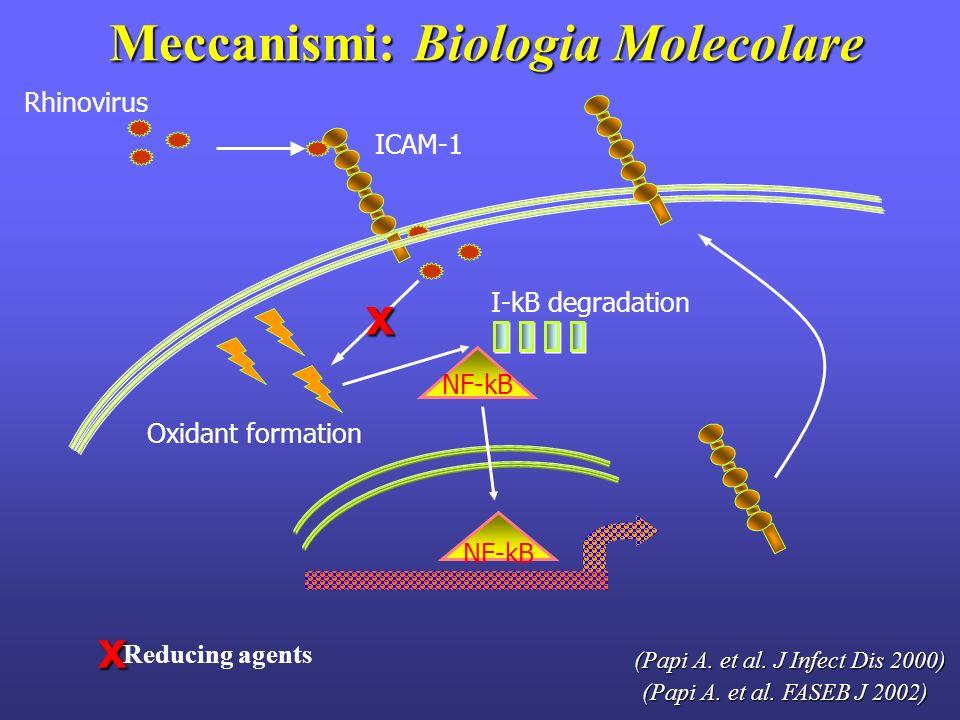 Meccanismi: Biologia Molecolare