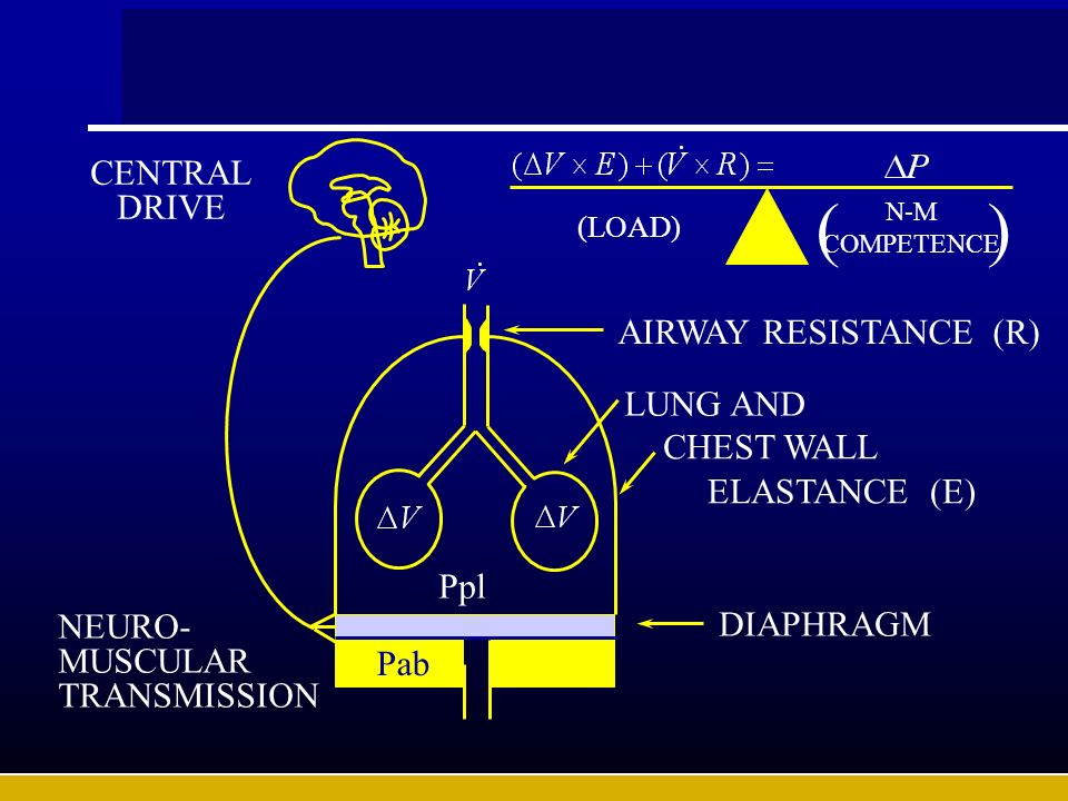 ( ) CENTRALDRIVE AIRWAY RESISTANCE (R) LUNG AND CHEST WALL