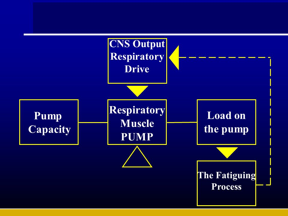 Respiratory Muscle PUMP Pump Capacity Load on the pump
