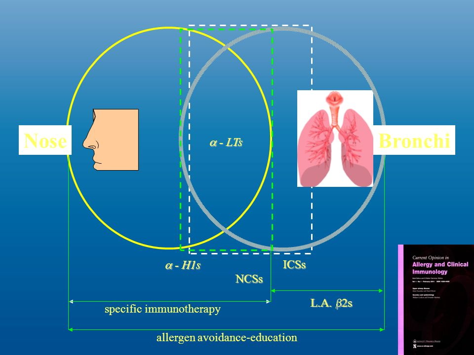 Nose Bronchi a - LTs a - H1s ICSs NCSs L.A. b2s specific immunotherapy