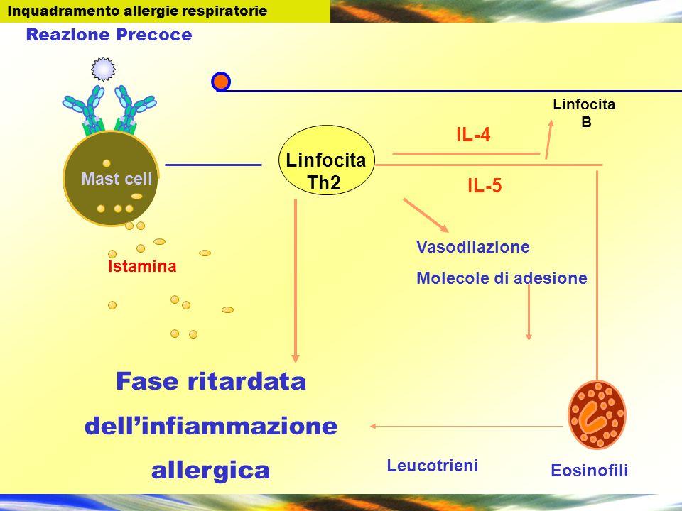 Fase ritardata dell'infiammazione allergica