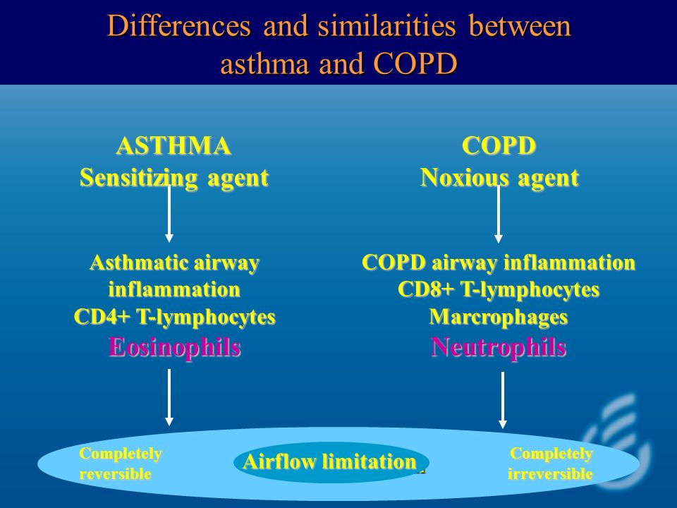 COPD airway inflammation