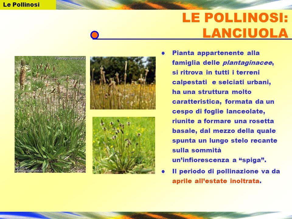 LE POLLINOSI: LANCIUOLA