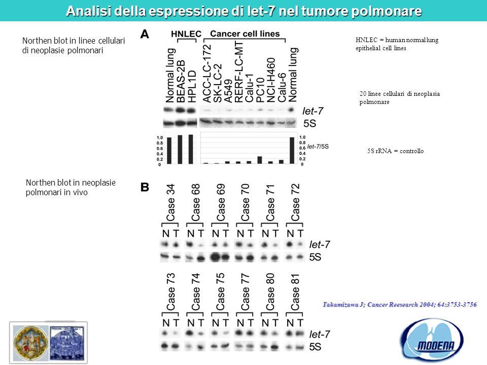 Analisi della espressione di let-7 nel tumore polmonare