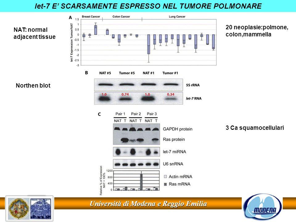 let-7 E' SCARSAMENTE ESPRESSO NEL TUMORE POLMONARE