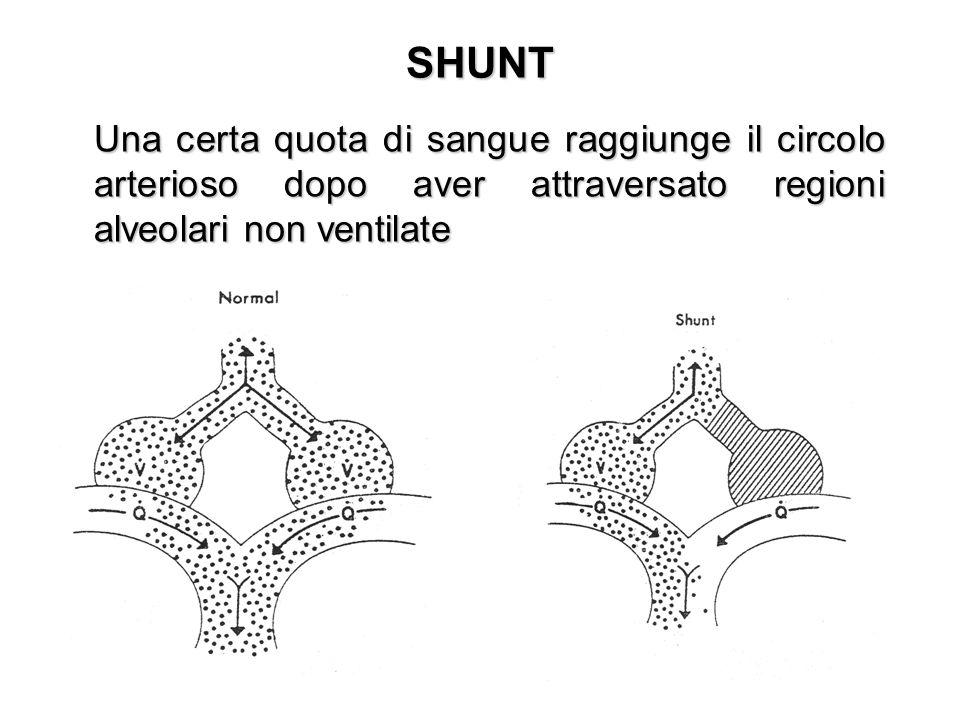 SHUNTUna certa quota di sangue raggiunge il circolo arterioso dopo aver attraversato regioni alveolari non ventilate.