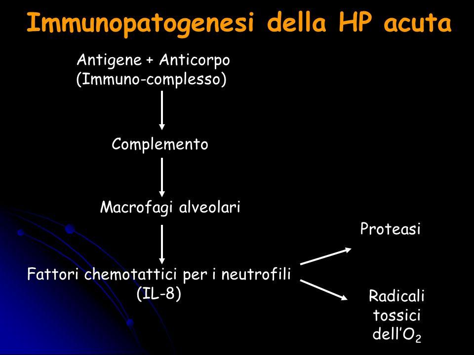 Immunopatogenesi della HP acuta