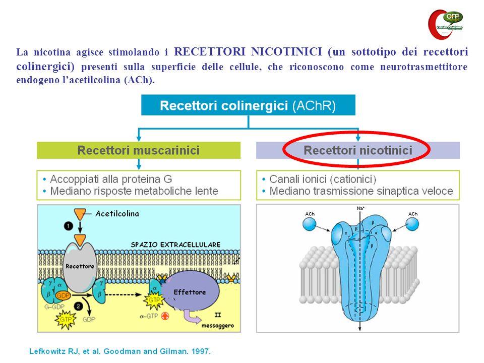 La nicotina agisce stimolando i RECETTORI NICOTINICI (un sottotipo dei recettori colinergici) presenti sulla superficie delle cellule, che riconoscono come neurotrasmettitore endogeno l'acetilcolina (ACh).