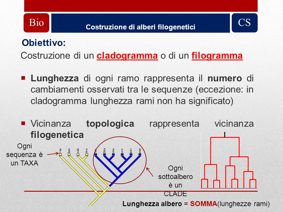 Costruzione di alberi filogenetici