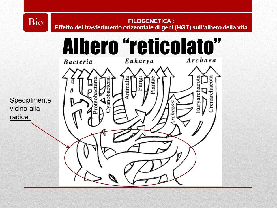 Albero reticolato Bio Specialmente vicino alla radice FILOGENETICA :