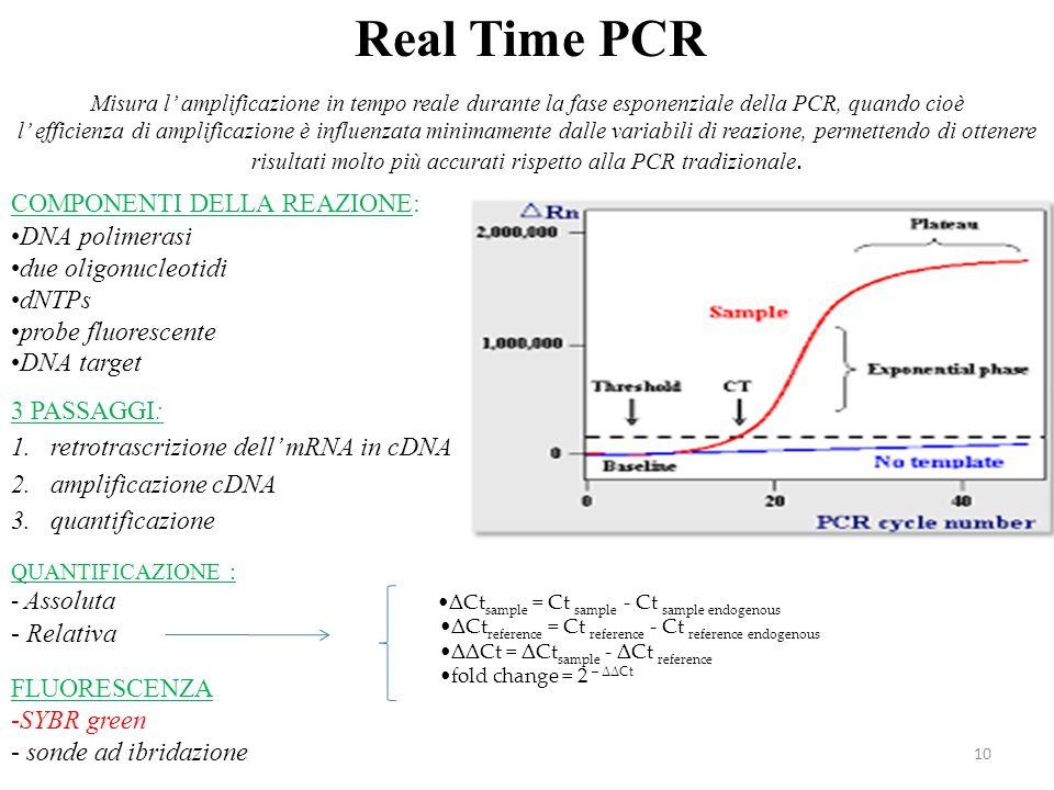 Real Time PCR COMPONENTI DELLA REAZIONE: DNA polimerasi