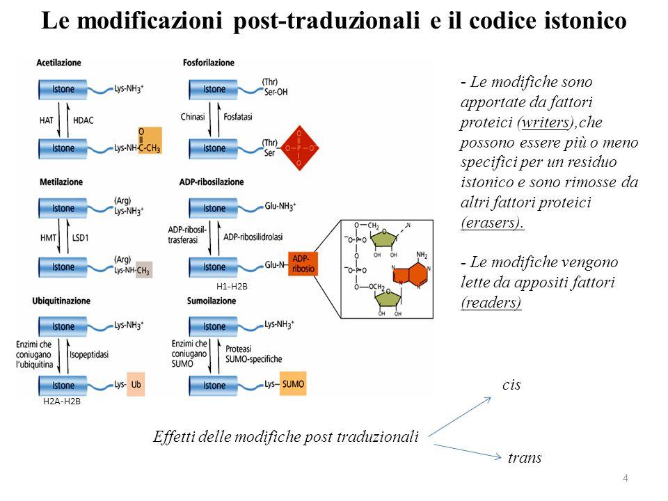 Le modificazioni post-traduzionali e il codice istonico