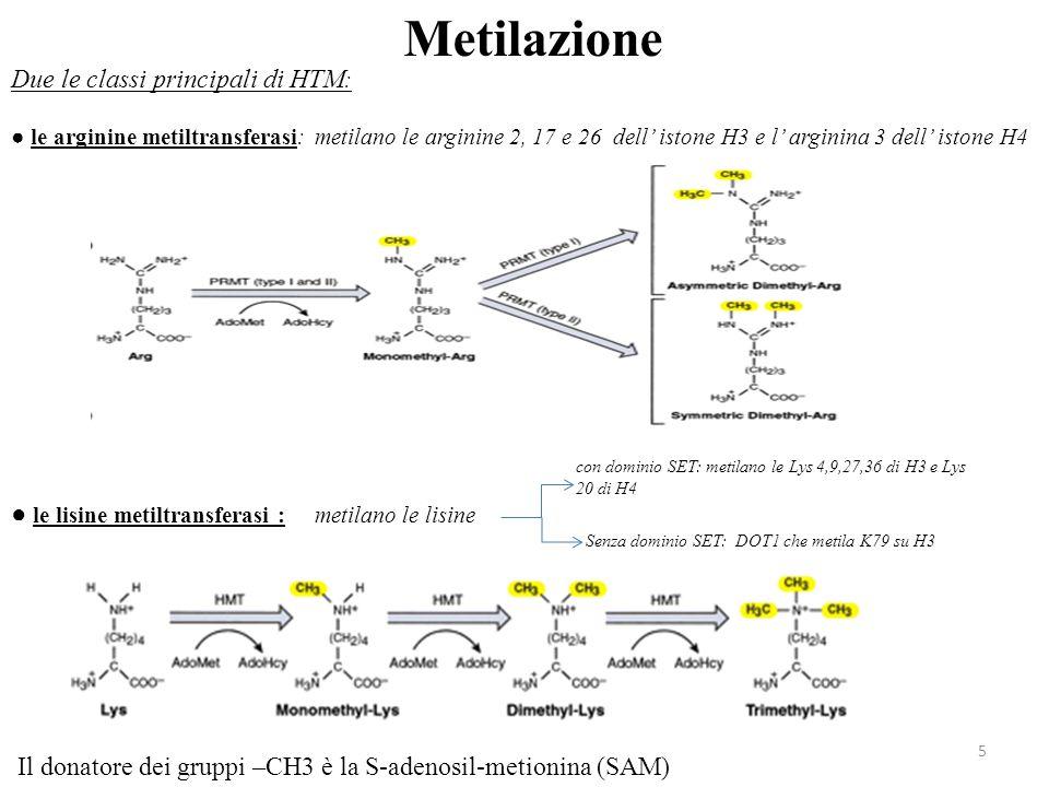 Senza dominio SET: DOT1 che metila K79 su H3