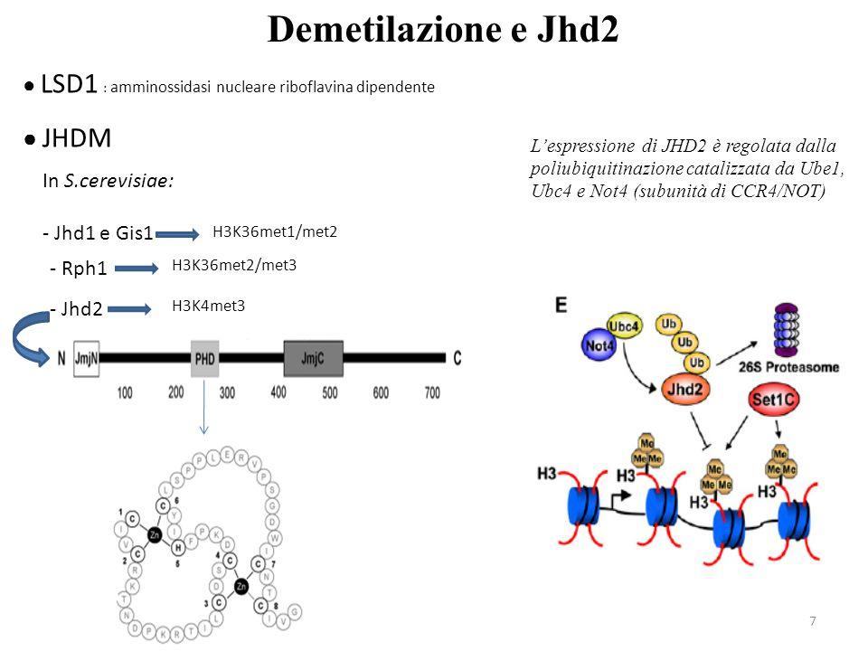 Demetilazione e Jhd2 ● JHDM