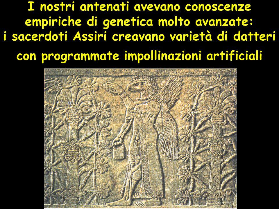 I nostri antenati avevano conoscenze empiriche di genetica molto avanzate: i sacerdoti Assiri creavano varietà di datteri con programmate impollinazioni artificiali