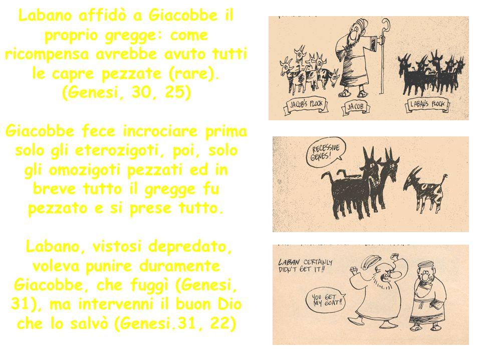 Labano affidò a Giacobbe il proprio gregge: come ricompensa avrebbe avuto tutti le capre pezzate (rare).