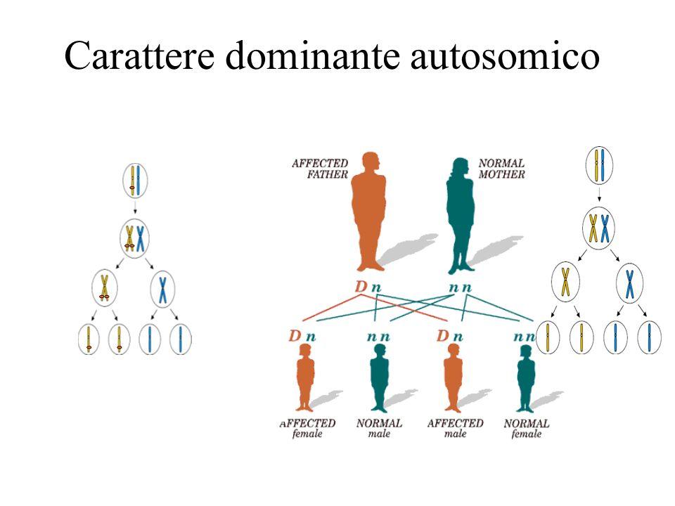 Carattere dominante autosomico