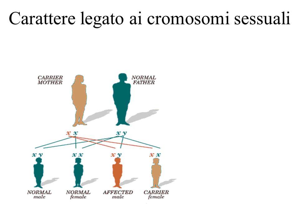 Carattere legato ai cromosomi sessuali