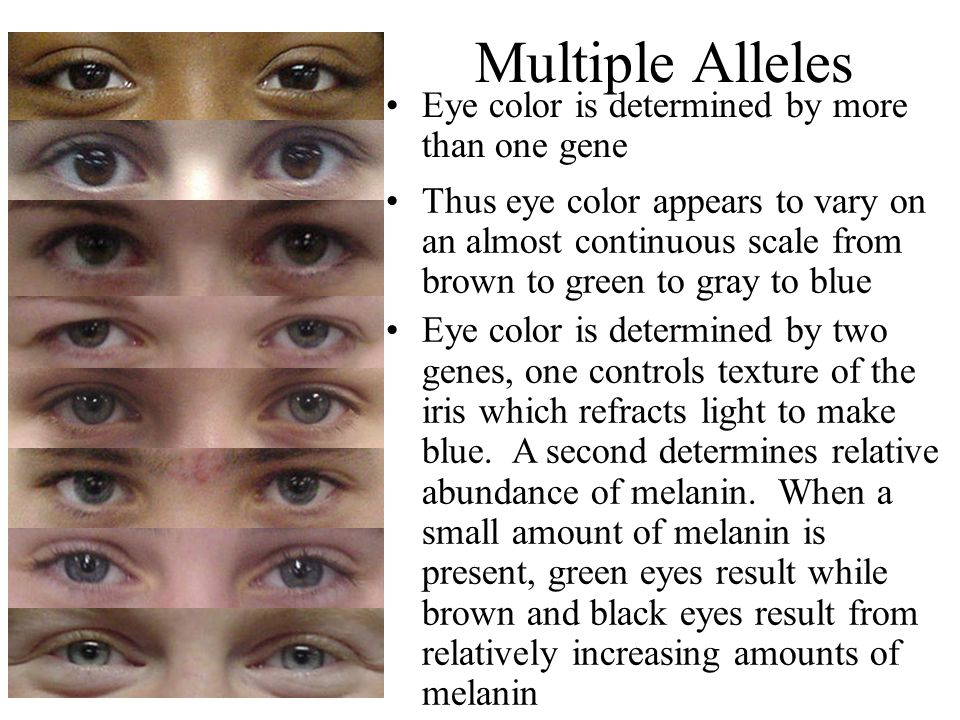 Multiple Alleles Eye color is determined by more than one gene
