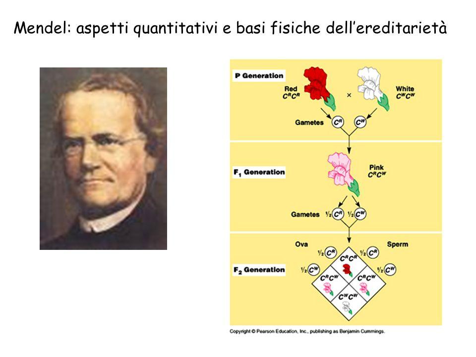 Mendel: aspetti quantitativi e basi fisiche dell'ereditarietà