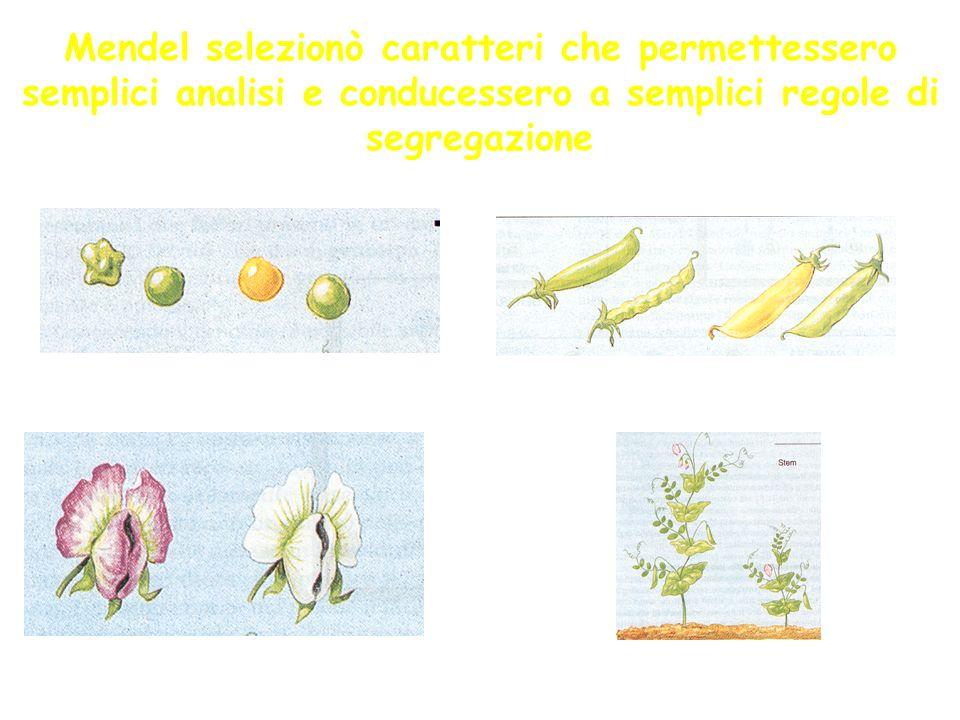 Mendel selezionò caratteri che permettessero semplici analisi e conducessero a semplici regole di segregazione