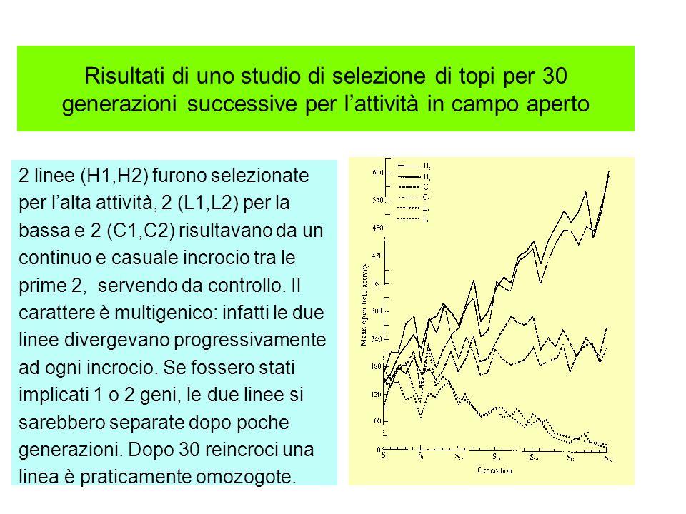 Risultati di uno studio di selezione di topi per 30 generazioni successive per l'attività in campo aperto