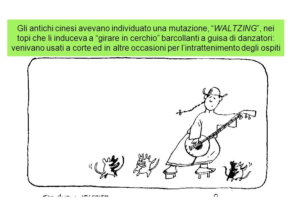Gli antichi cinesi avevano individuato una mutazione, WALTZING , nei topi che li induceva a girare in cerchio barcollanti a guisa di danzatori: venivano usati a corte ed in altre occasioni per l'intrattenimento degli ospiti