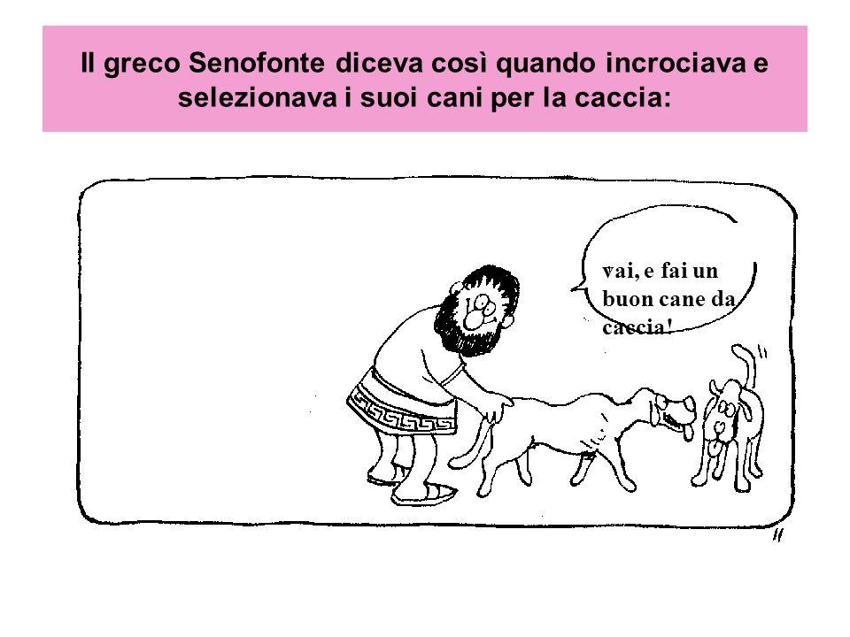 Il greco Senofonte diceva così quando incrociava e selezionava i suoi cani per la caccia: