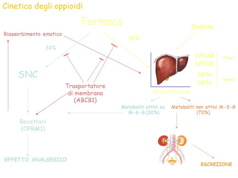 Metaboliti attivi es. M-6-G (30%) Metaboliti non attivi M-3-G (70%)