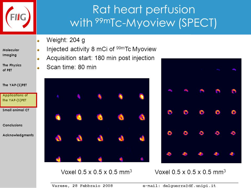 Rat heart perfusion with 99mTc-Myoview (SPECT)