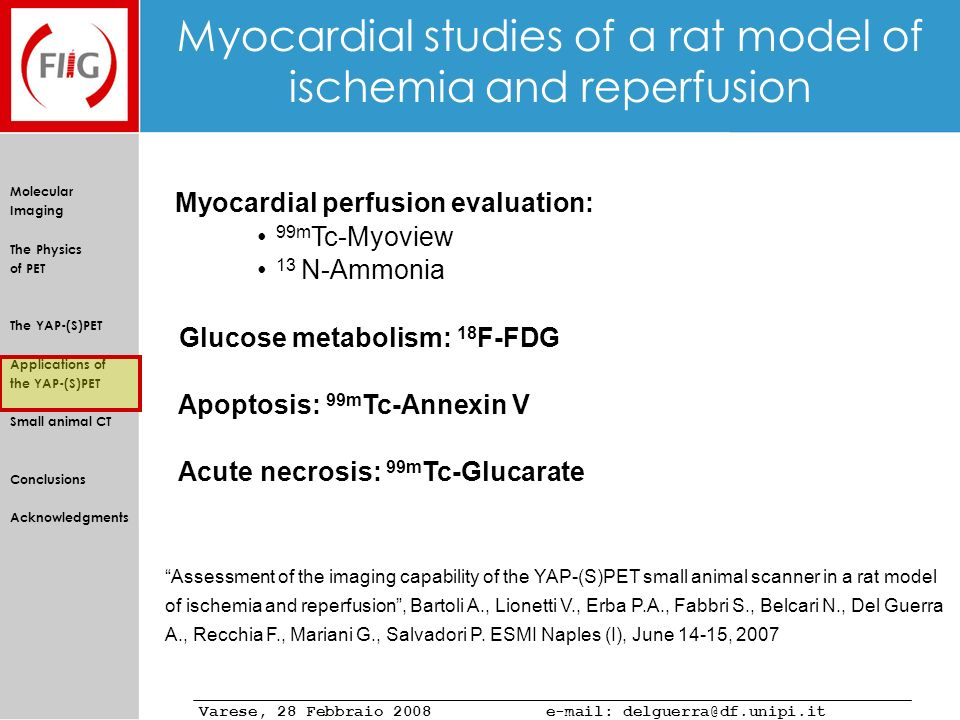 Myocardial studies of a rat model of ischemia and reperfusion
