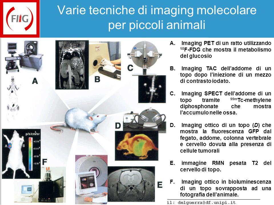 Varie tecniche di imaging molecolare per piccoli animali
