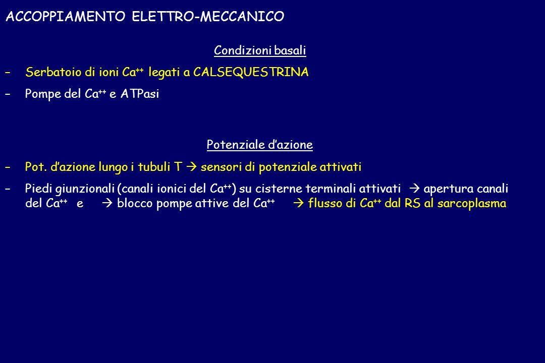 ACCOPPIAMENTO ELETTRO-MECCANICO