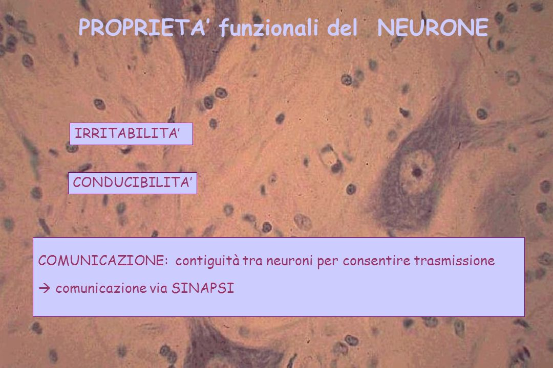 PROPRIETA' funzionali del NEURONE