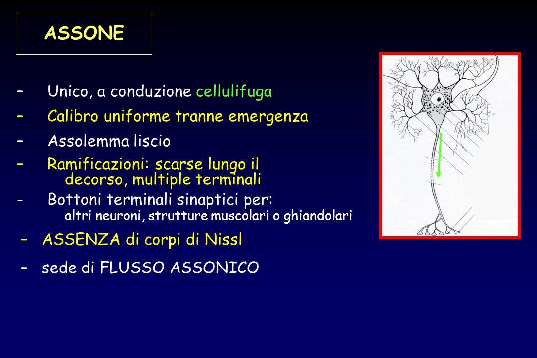 ASSONE Unico, a conduzione cellulifuga