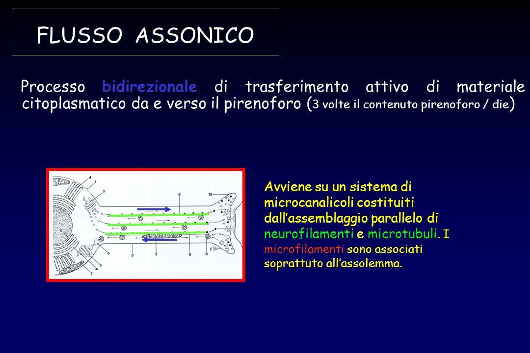 FLUSSO ASSONICO