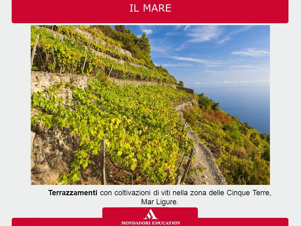 Terrazzamenti con coltivazioni di viti nella zona delle Cinque Terre,