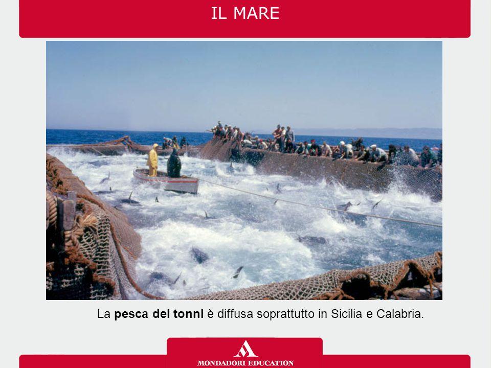 La pesca dei tonni è diffusa soprattutto in Sicilia e Calabria.