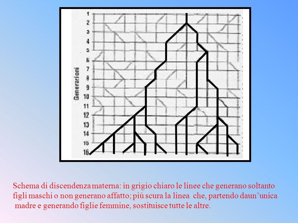 Schema di discendenza materna: in grigio chiaro le linee che generano soltanto