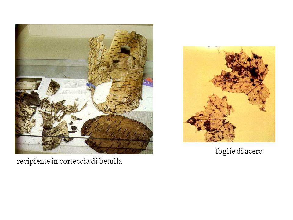 foglie di acero recipiente in corteccia di betulla