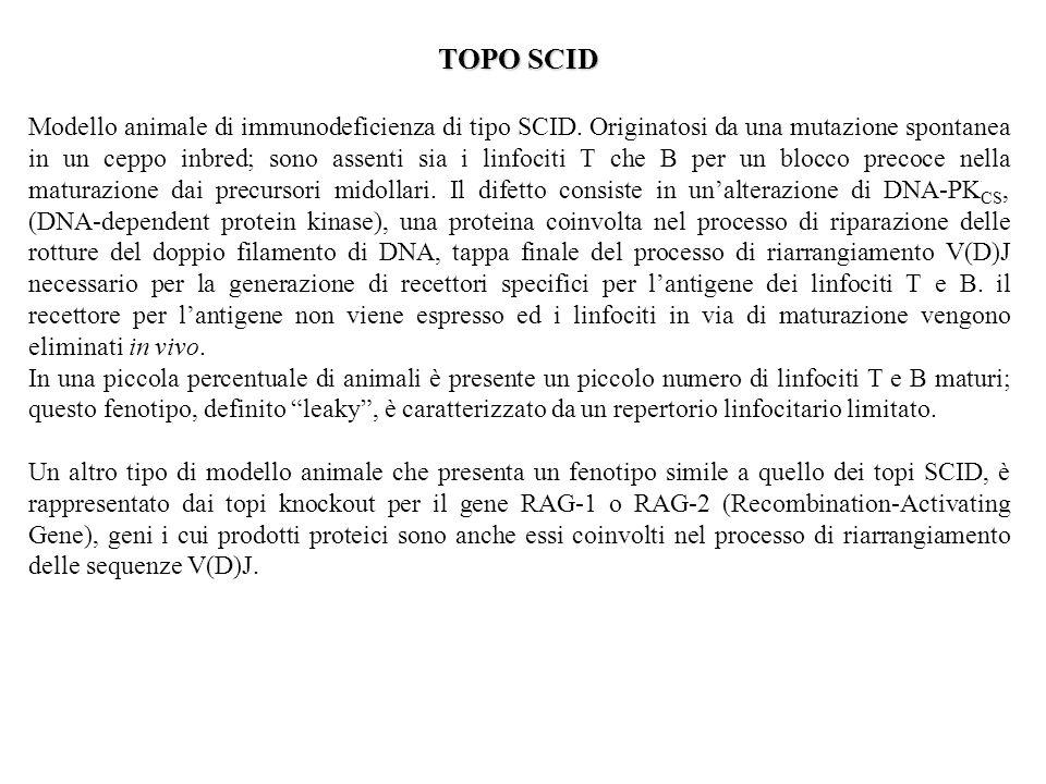 TOPO SCID