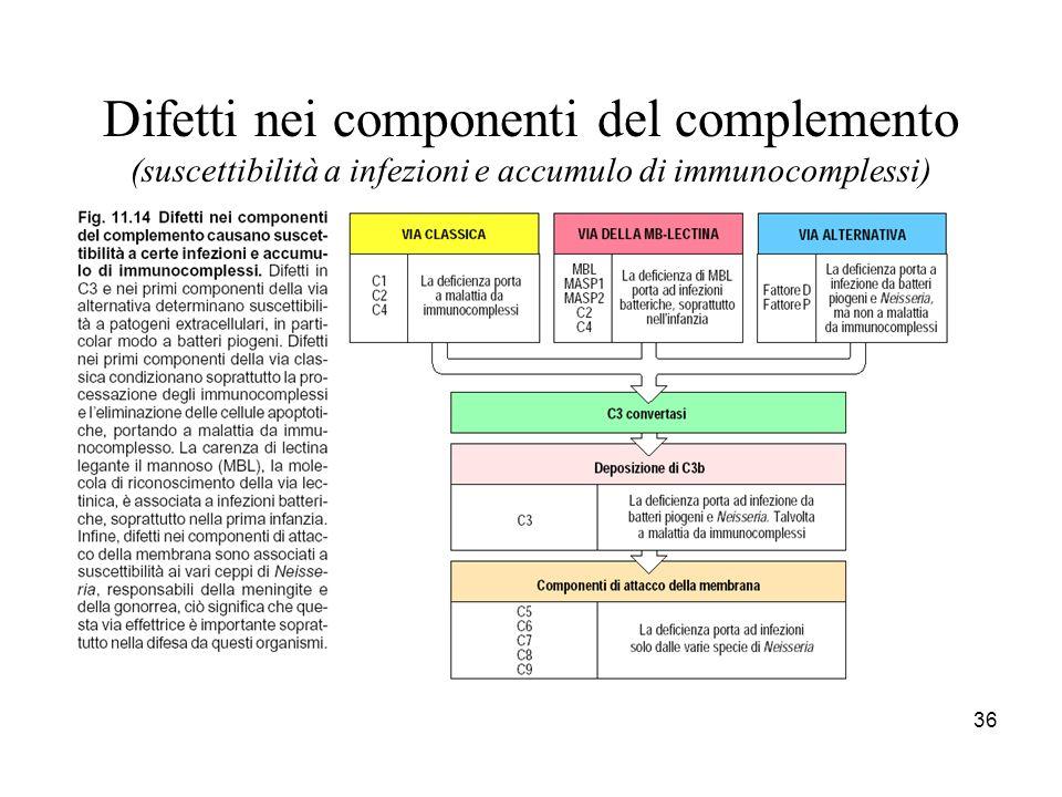 Difetti nei componenti del complemento (suscettibilità a infezioni e accumulo di immunocomplessi)