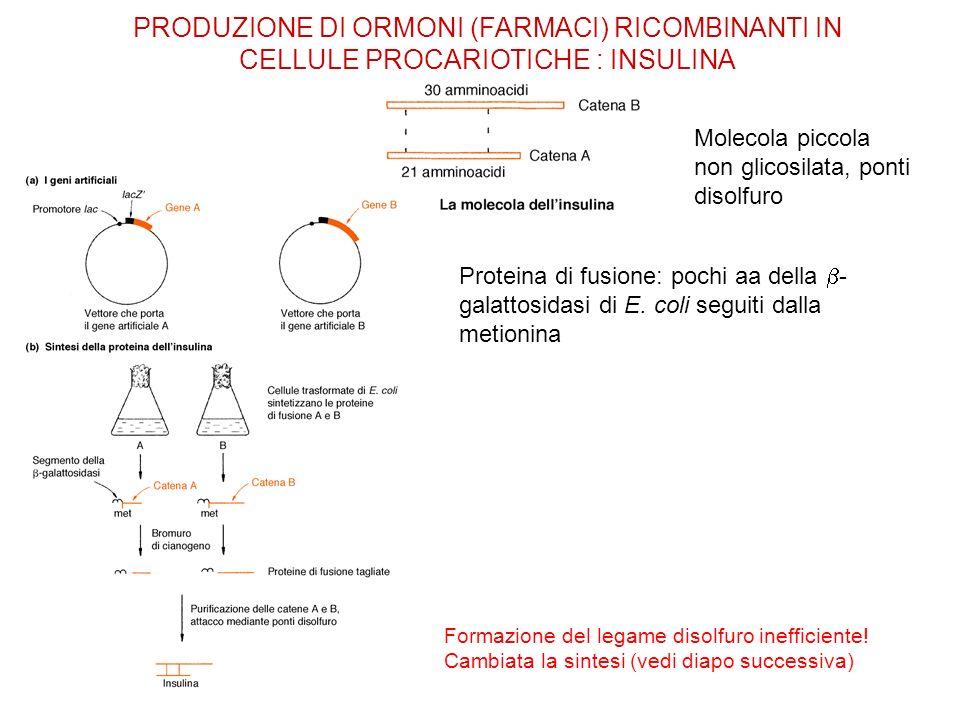 PRODUZIONE DI ORMONI (FARMACI) RICOMBINANTI IN CELLULE PROCARIOTICHE : INSULINA
