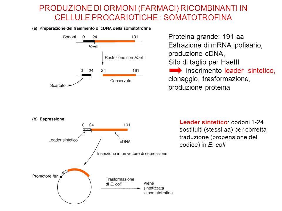 PRODUZIONE DI ORMONI (FARMACI) RICOMBINANTI IN CELLULE PROCARIOTICHE : SOMATOTROFINA